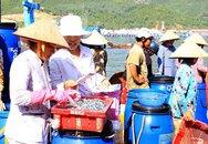 Ninh Thuận: Vì mục tiêu nâng cao chất lượng dân số vùng biển