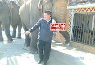 Kỳ nhân nguyện cả đời chăm sóc cho voi giữa đại ngàn: Cuộc chiến dành sự sống cho voi