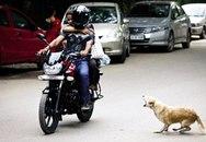 Ấn Độ bất lực trước nạn chó hoang