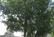 Thanh Hóa: Phát hiện xác thanh niên treo cổ tự tử trên cây