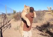 Cảm động cảnh chú sư tử lao tới ôm chặt người chăm sóc
