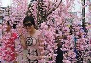 Lộng lẫy sắc hoa anh đào ở Việt Nam