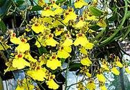 Tự trồng hoa cảnh