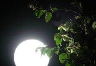 Đêm trăng trên đỉnh Cô Tô
