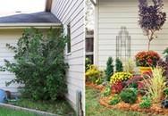 Làm đẹp cho vườn nhà