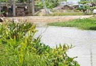Hàng chục cá sấu sổng chuồng ở TPHCM