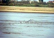Một xác phụ nữ khỏa thân trôi trên sông