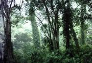 Tranh đất rừng, con chết, bố trọng thương
