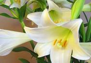 17 bài thuốc chữa ho bằng hoa