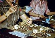 Uống thuốc đông dược trộn tây dược: Coi chừng thiệt mạng