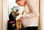 Bị chó cắn khi mang thai có nên tiêm vaccine phòng dại?