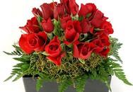 Bài thuốc hay từ hoa hồng