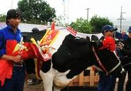 Giải thưởng 35 triệu đồng cho Hoa hậu bò sữa 2009