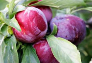 4 loại hoa quả đậm màu giúp bạn trẻ lâu hơn