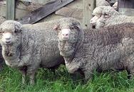 Cậu bé sống 8 năm trong chuồng cừu dột nát