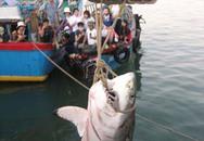 Ngư dân lỗ nặng sau chuyến bắt cá mập khổng lồ