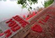 Chùm ảnh: Hoa lộc vừng trải thảm đỏ bên hồ Gươm