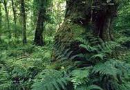 Đẹp sững sờ rừng cấm Nghi Sơn