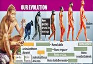 Mắt xích bí ẩn về lịch sử tiến hóa con người