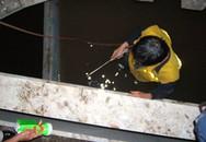Xà lan 1.000 tấn 'đội' cầu Bình Lợi