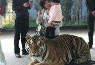 Cưỡi lên lưng hổ để chụp ảnh lưu niệm