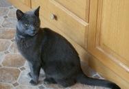 Chú mèo vượt 3.200 km để tìm chủ cũ