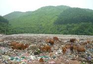 Phở nửa triệu và bò ăn rác