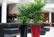 Trồng cây cảnh chống độc trong nhà
