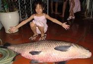 Câu được cá trắm đen nặng 34kg
