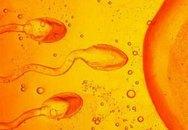 10 bí mật chưa khám phá về tinh trùng