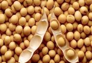 Thêm 3 tác dụng chữa bệnh của đậu nành