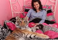 Choáng vì cô gái ngủ cùng với hổ