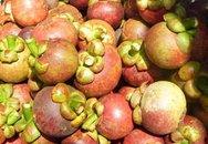 Hè này ăn trái cây miễn phí ở đâu?