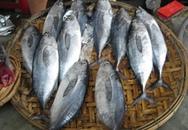 Nhiều người ngộ độc do ăn cá ngừ