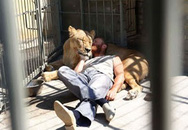 Ngỡ ngàng người ăn ngủ cùng sư tử