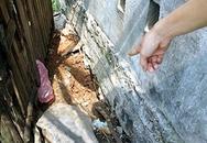 Cận cảnh nơi giấu vàng trong vụ thảm sát ở Bắc Giang