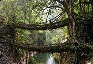 Cầu bằng rễ cây độc nhất hành tinh