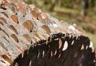 Tiền mọc bí ẩn trên cây
