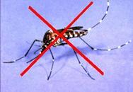 Mẹo hay diệt côn trùng