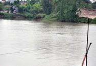 Cá heo 'nhảy múa' trên sông