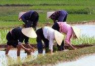 Dân số và lao động nông thôn trước thềm CNH-HĐH