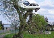 Cả xe lẫn người treo trên... ngọn cây
