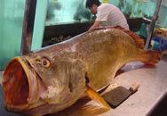 Bắt được cá khổng lồ, kiếm được 10 tỷ