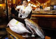 Choáng cá ngừ nặng hơn 2 tạ, giá 36 tỷ đồng