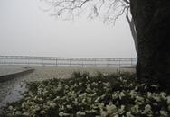 Ngắm Hà Nội mơ màng trong sương