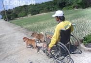 Chuyện hiếm thấy về 2 chú chó kéo xe chở chàng trai bị liệt