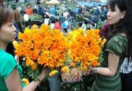 Tìm em trong chợ hoa