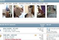 Thâm nhập chợ tình online