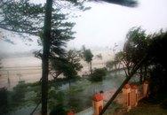 Bão số 11 tấn công: Biển Mỹ Khê dậy sóng dữ dội