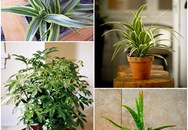 9 loại cây cảnh hút khí độc cực tốt